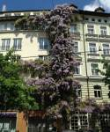 Pflanzen auf Häusern