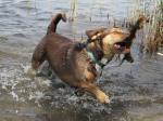 Fotos von fotos von nassen Tieren