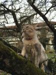 Minsky wieder mal auf einem Baum
