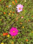 Blumen vor der Germeringer Stadthalle