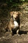 Fotos von fotos von nicht ganz sauberen Hunden