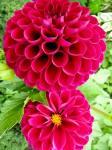Fotos von fotos von prächten Blumen