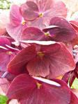 Fotos von fotos von beruhigende Pflanzen