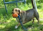 Fotos von fotos von Tieren, die wissen, was sie wollen
