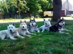 unsere snowdogs
