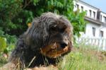 Fotos von fotos von unwiderstehlichen Haustieren, schön in Szene gesetzt und professionell fotografiert