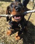 Fotos von fotos von Steckerlhunden