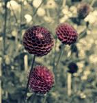 Andere Blumen