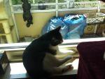 Gegen die Sonne sind alle Katzen schwarz ?