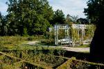 Im Rosengarten von Temeschwar