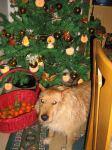Frohe Weihnachten von Maurice