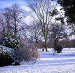 Fotos von fotos von Blumen im Schnee
