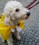 Hund bei der Anti-Atom-Demo in München