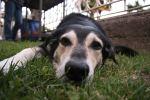 Müde Nase im Gras