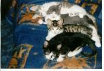 Flitzi, Moritz, Maxi jr., Lucy