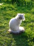 Niki im Sonnenglanz