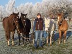 alle meine Pferdchen :-))