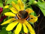 Fotos von fotos von Schmetterlingen an einer Blume