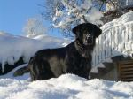 Leo im Schnee