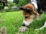 fay mit schildkröte
