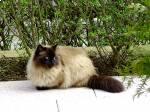 Sissi auf der Terrasse