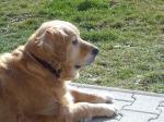 Lilly im Garten (März 08)