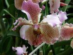 Orchidee aus der Wilhelma Stuttgart