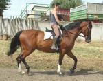 Beistellpferd abzugeben