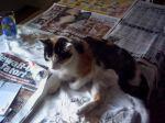 Mimi beim Zeitunglesen