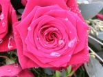 Fotos von fotos von anmutigen Blumen