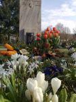 Trauriger Frühling