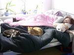 Suchbild.. Hier sind 5 Katzen versteckt...