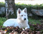 Enya im Herbstlaub