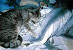 schnuckie beim schlafen