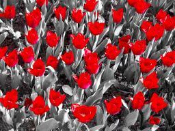 Nur die Blüte zählt!